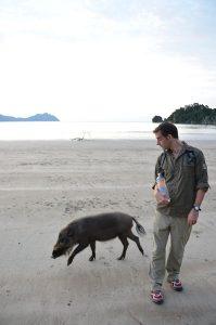 Bako Wild Pigs