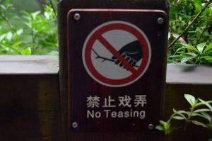 Chengdu-No-Teasing